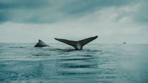 ballenas bitcoin