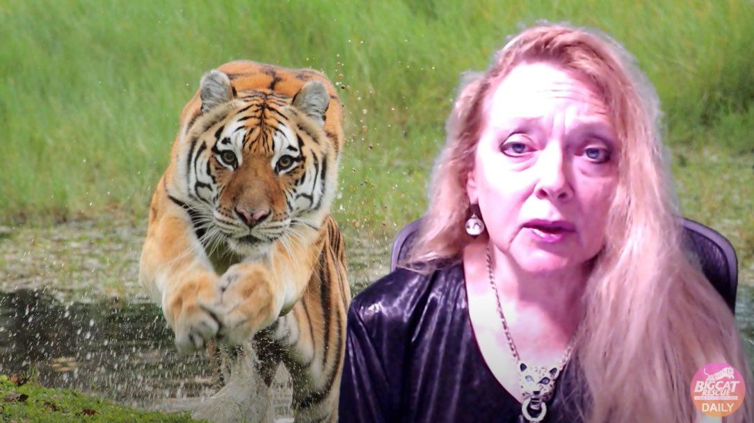 rival de Tiger King