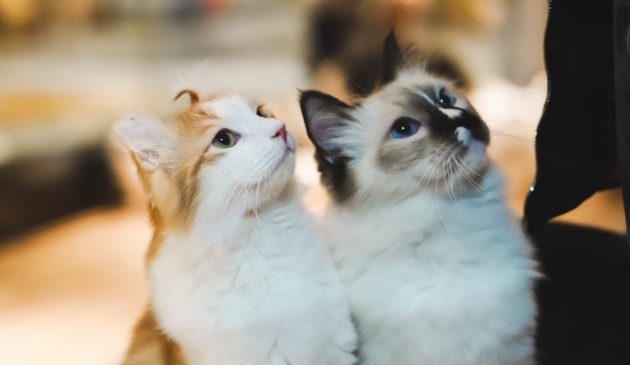 gatos grumpy cat sad cat