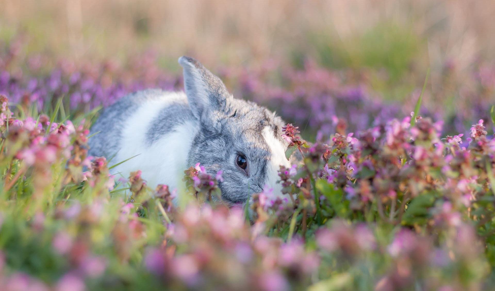 bunny-unsplash